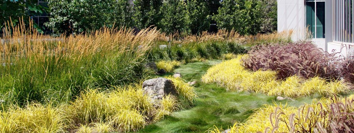 5 Pro Tips For A Drought Friendly Hoa Jensen Landscape